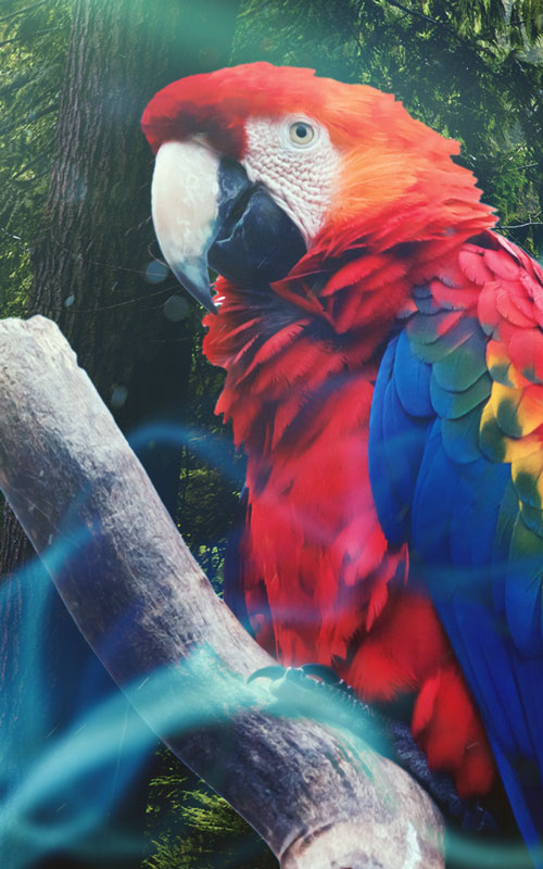 los pájaros - photoshop surrealismo