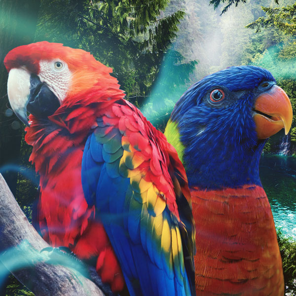 los pájaros - montaje surrealista